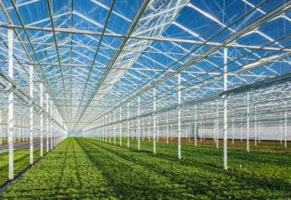 Nieuwsbericht energie glastuinbouw