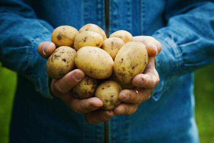 Aardappelteler vraagt coronasteun aan