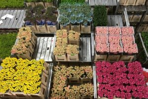 bloemistenbranche